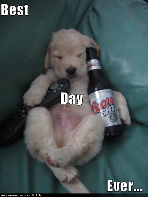 BEST-DAY-EVER-dogs-25606689-500-667_2014-07-16.jpg