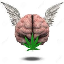 cerebro-3.jpg