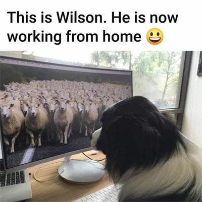 SheepDog.jpg