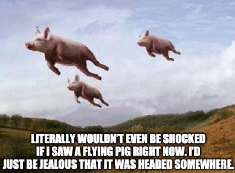 pigs_2020-09-03.jpg